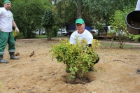 Посади свое дерево 2015